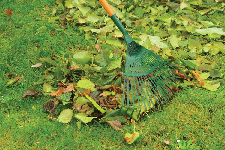Artificial Grass - Cleaning With Rake