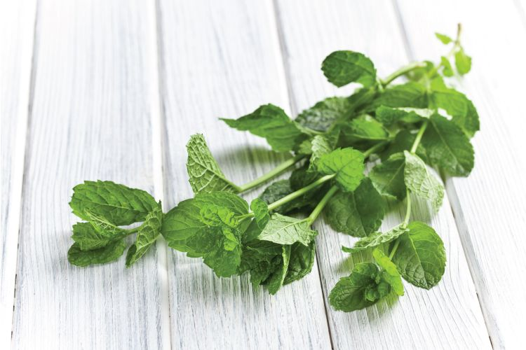 indian herbs kitchen-mint or pudina
