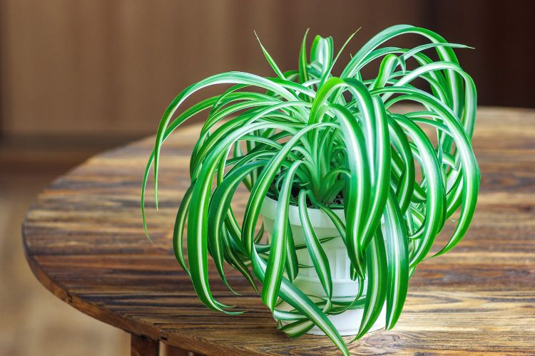Best indoor plants