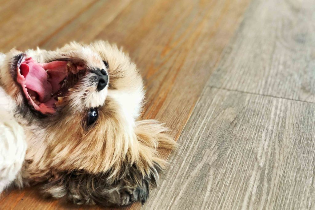 pet-friendly flooring-vinyl flooring-flooring for pets