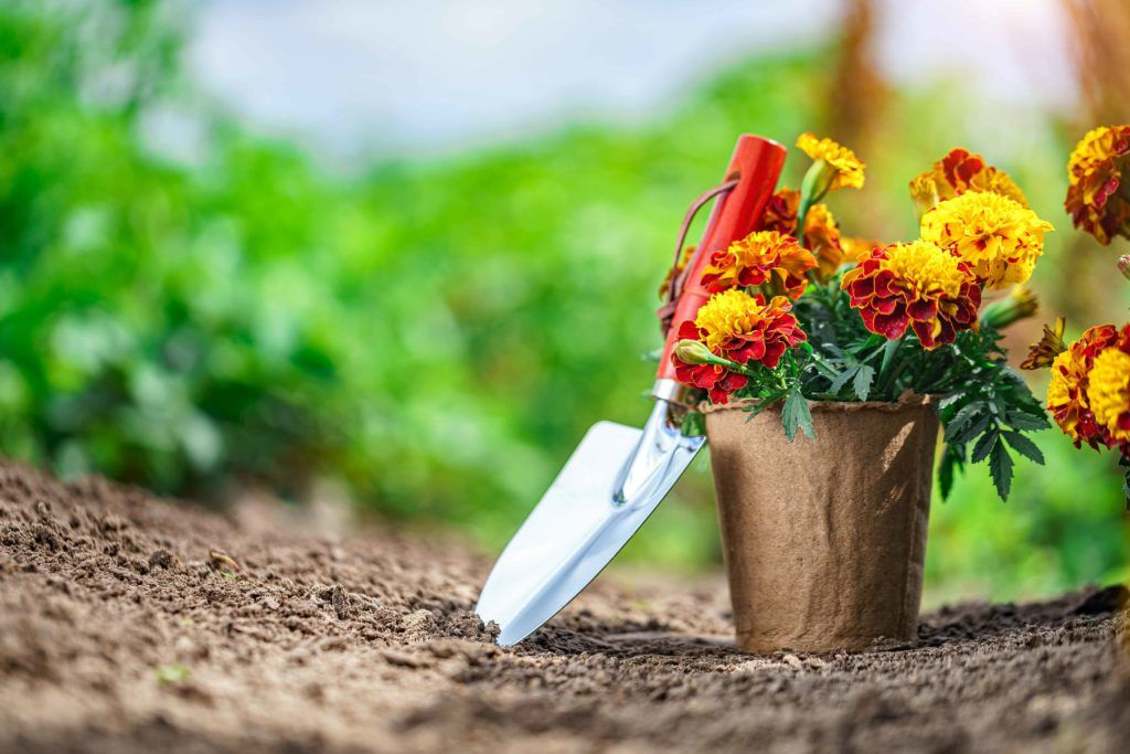 plants that keep bugs away-potted-plants-marigolds