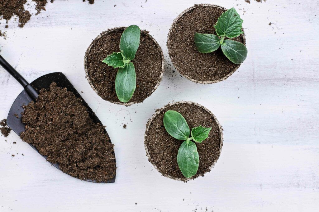 which soil is best for plant growth-heavy soil-light soil