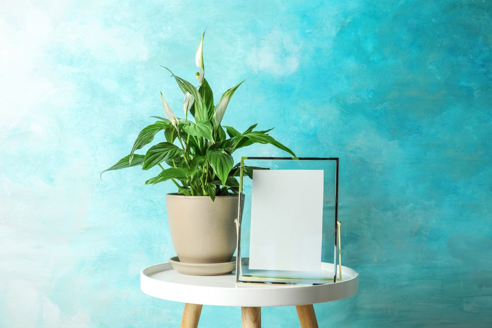 peace lily-blue wall designs