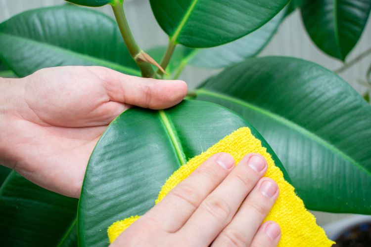 how-to-clean-garden-dust-leaves-cleaning