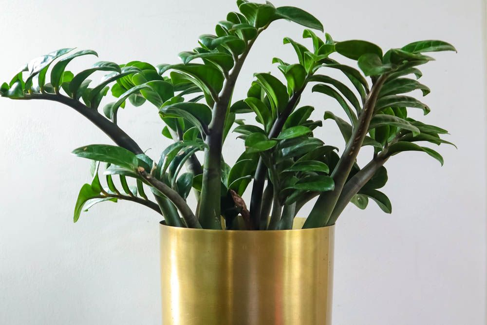 The Ultimate List Of Indoor Plants For Lazy People