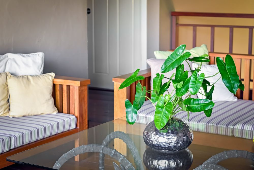 what plants are plants good for a balcony garden in south india-philodendron