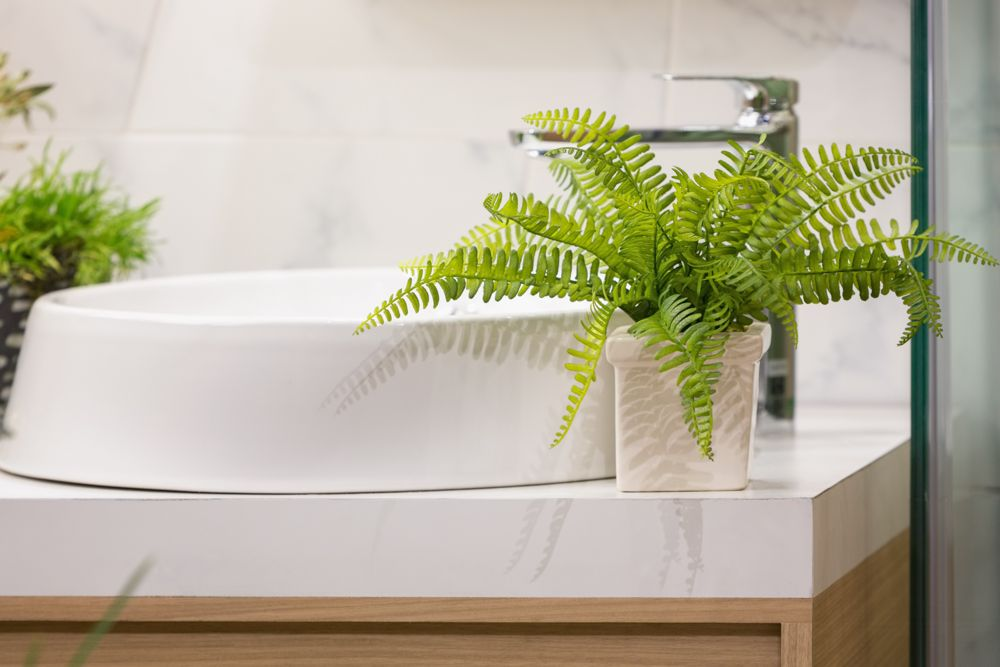 indoor plants india-ferns-bathroom