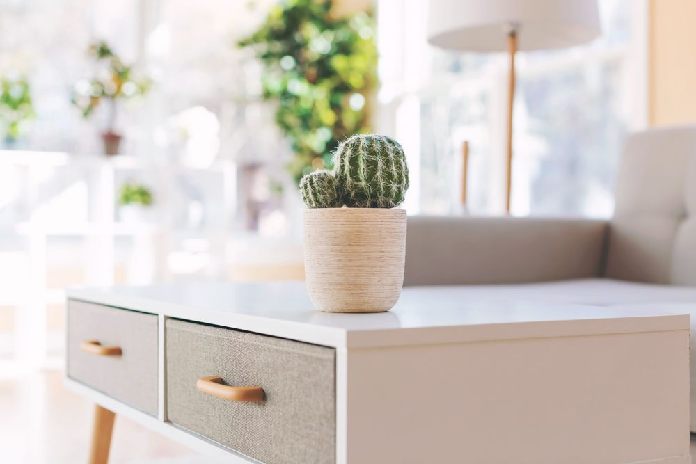 decorating-with-plants-cacti-on-table-living-room