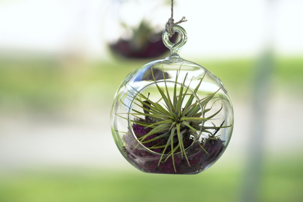 decorating-with-plants-air-plants-outdoor