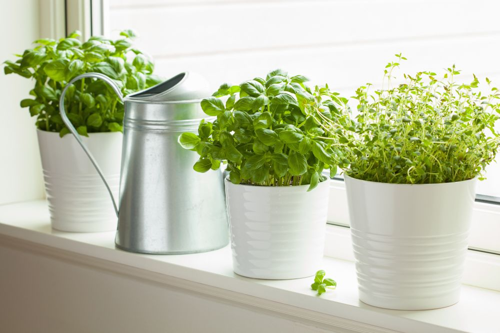 decorating-with-plants-culinary-herbs-kitchen